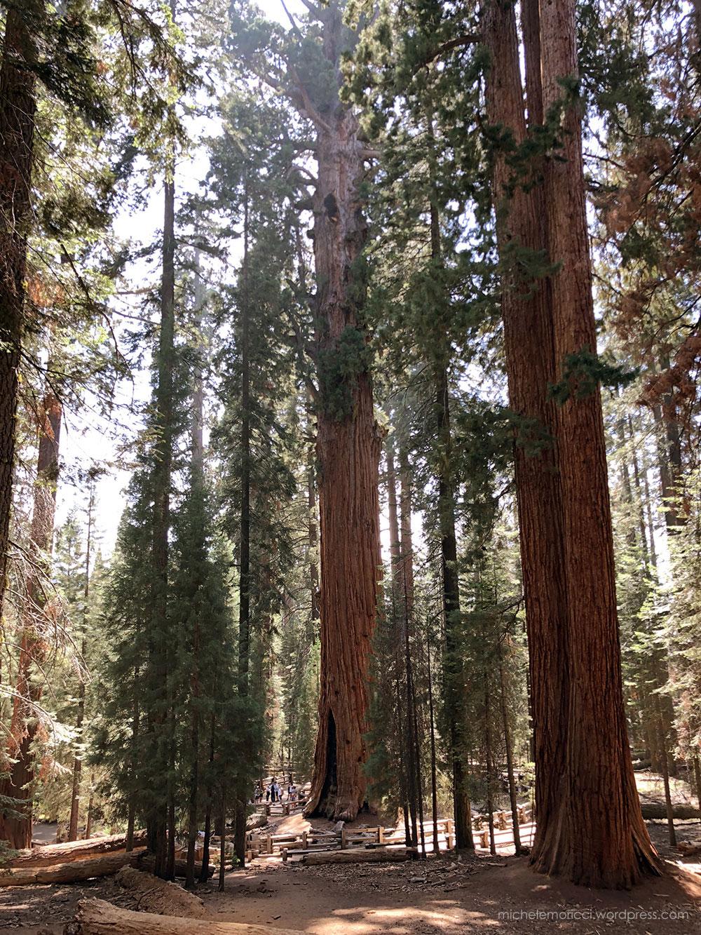 SequoiaPark-MMoricci-2018-2