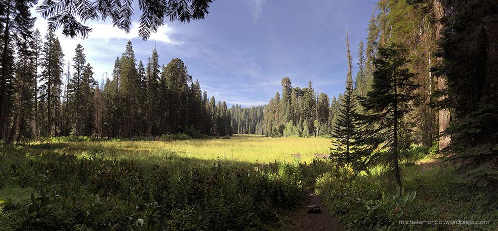 SequoiaPark-MMoricci-2018-5